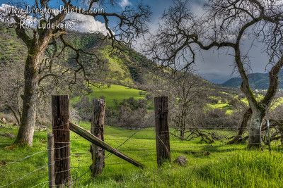 Early Spring - Dry Creek Drive - Tulare County