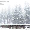 June Snowstorm - Mt. Shasta