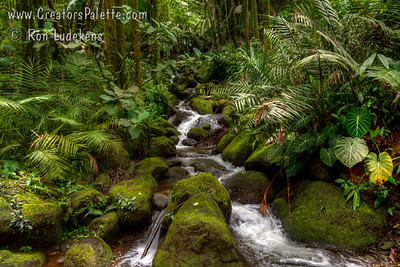 Hawaii Tropical Botanical Garden, Big Island, Hawaii