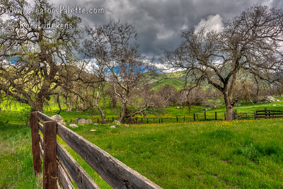 Early Spring - Yokohl Valley, CA