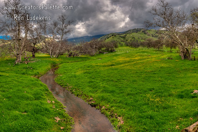 Early Spring Bloom & Creek - Yokohl Valley, CA