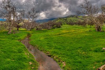Early Spring Bloom & Creek - Yokohl Valley, CA