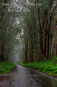 Country road near Waimea - Big Island of Hawaii