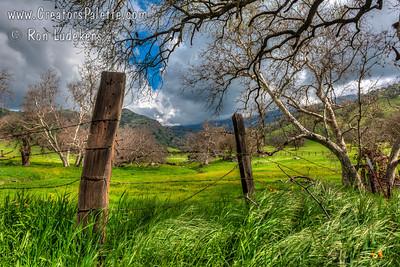 March Beauty - Yokohl Valley, CA