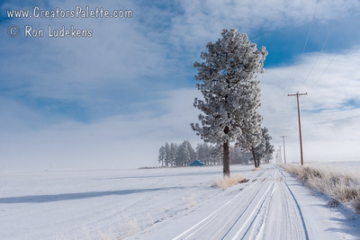 Frozen farms near Macdoel - east of Mt Shasta.
