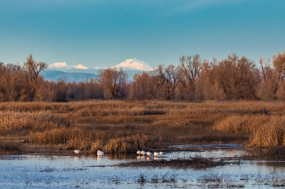 Looking north at Mount Shasta from Gray Lodge Wildlife Area