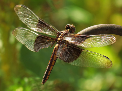 Dragonfly in bright sunlight.