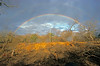 Double rainbow over the pride. Londolozi Game Preserve, South Africa