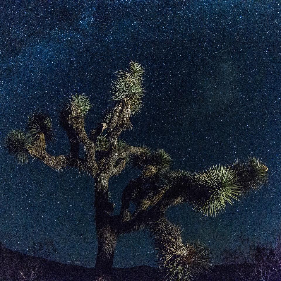 Joshua Tree —Milky Way