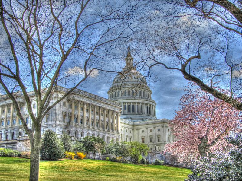 Washington, D.C. Spring 2011 Copyright Sue Steinbrook