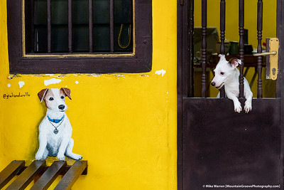 In George Town, Panang Island, Malaysia, many homeowners paint pictures of their pets on the outside of their houses!