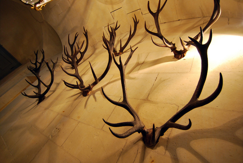 One whole wall was filled with these massive antlers.