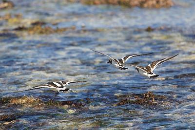 Birds flying along  a beach on the Yucatan