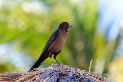 A Bird at Rest