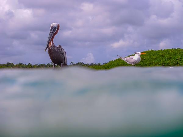 Waterfowl, Yucutan, Mexico