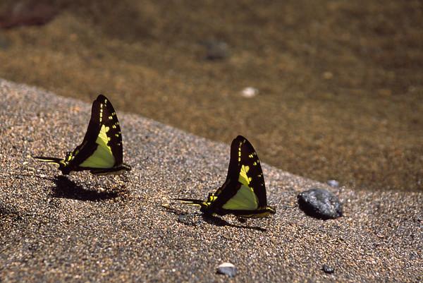 Butterflies, Costa Rica