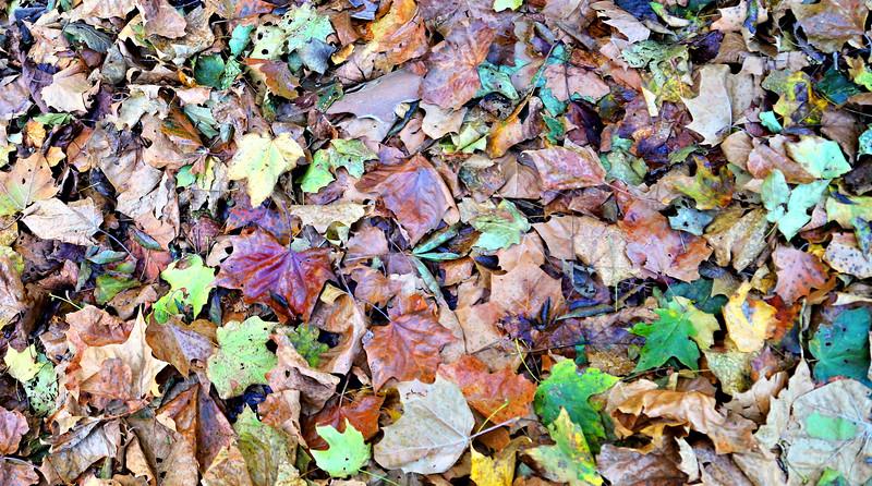 Leaves-002