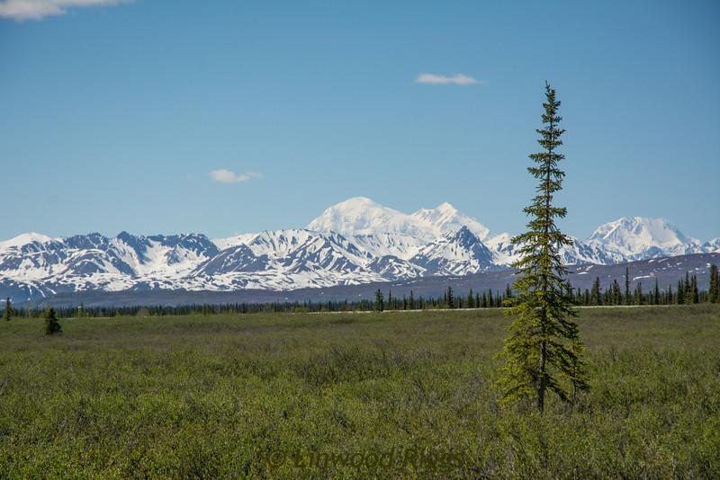 Denali (a.k.a. Mt. McKinley) as seen from the Alaska Railroad.