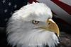 Patriotic eagle, MN