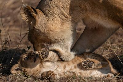 Mother knows best - Serengeti 2021