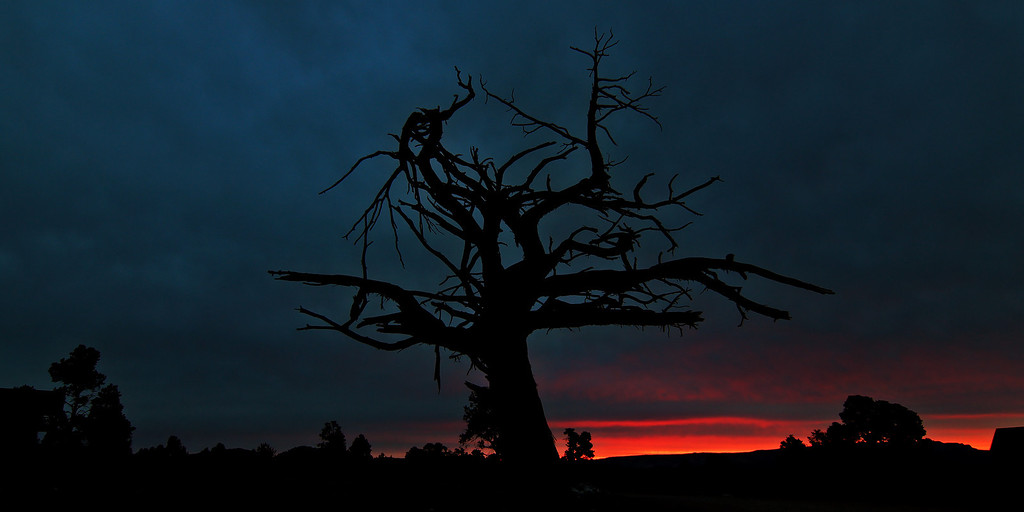 Tree of Morning