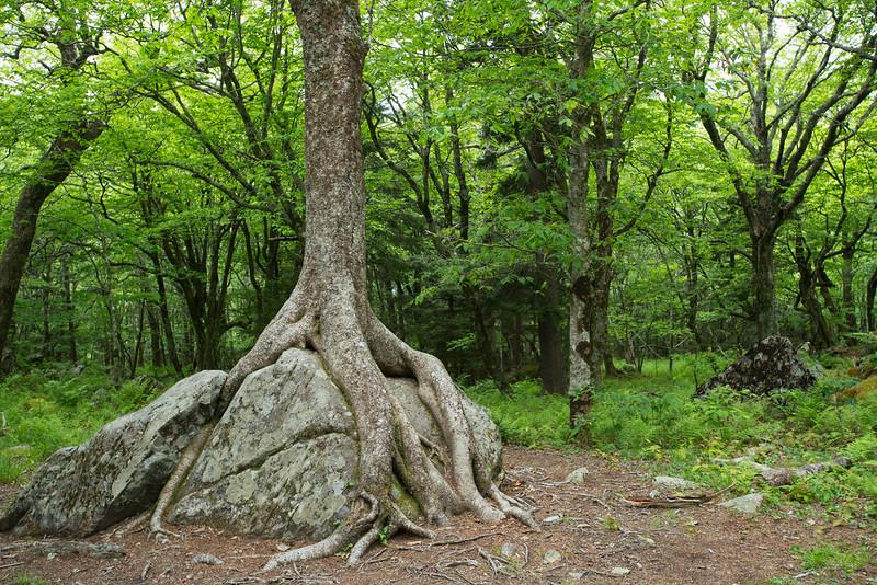 Grayson Highlands, Virginia