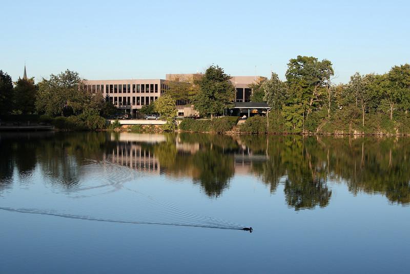 Duck gliding on the quarry pond, Naperville riverwalk