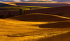 Hills of the Palouse region of Washington