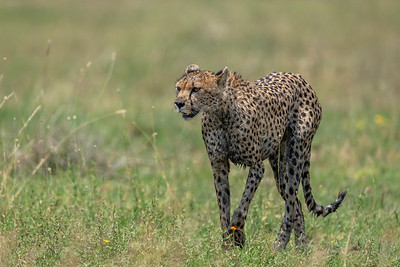 After the hunt - Serengeti 2021