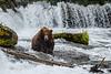 Bear 747 at Brooks Falls