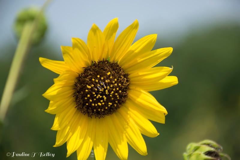 DSC_0224 Flower