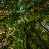 Rainforest Survival