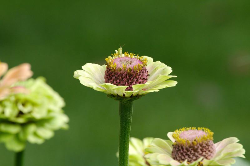 Little bug on a flower