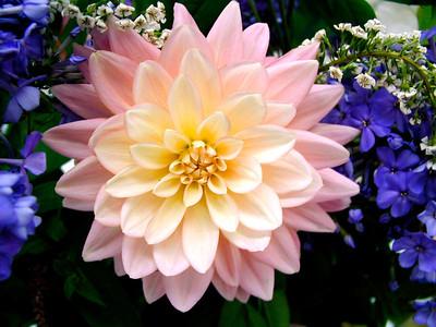 Washington County Fair Flower Show 2003