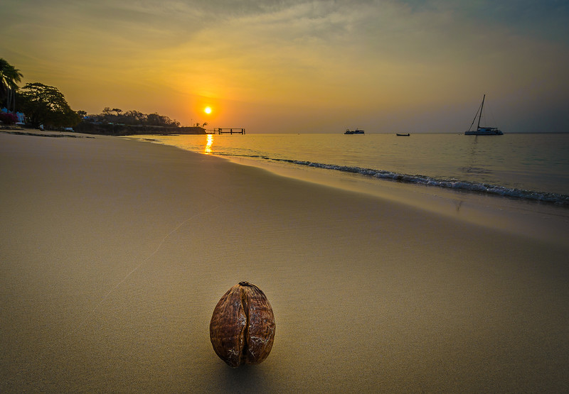 The Magical Paradise Coconut Photography By Messagez com
