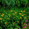 DSC_0327 Wild Flowers