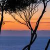 Twisty Tree at Wimbie Headlands