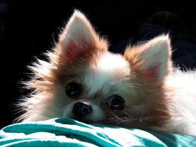 My BabyDog