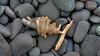 Driftwood corkscrew at Lake Superior, Light House Beach, #0052