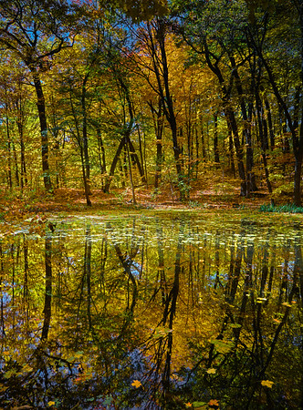Forest pond at the Minnesota Landscape Arboretum, Chaska, Mn., #1821