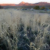 Tall Grass and Mt. Mestas