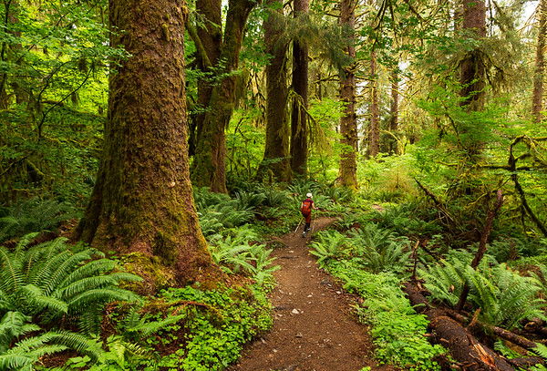 Hoh rainforest, Olympic National Park, Washongton