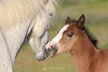 Wild mare and foal, Arizona
