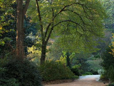 Duke Gardens, NC, 2012