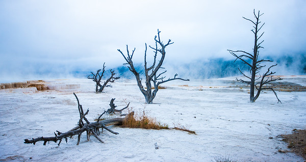 early morning in yellowstone