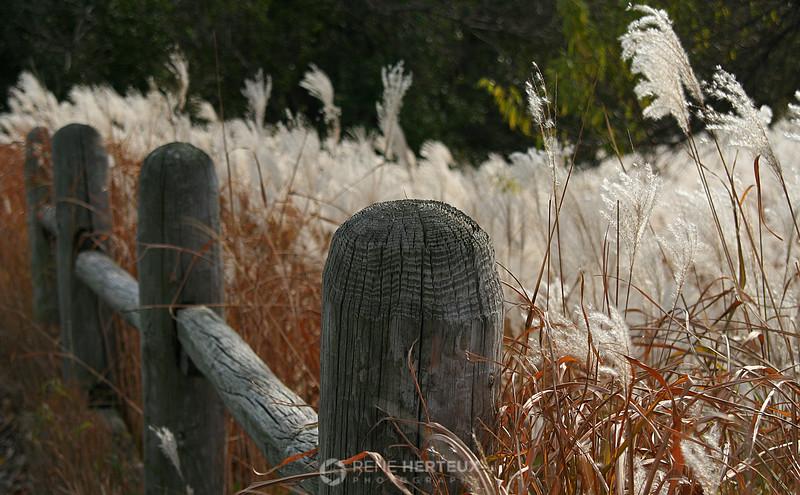 Fall fence, Edina MN