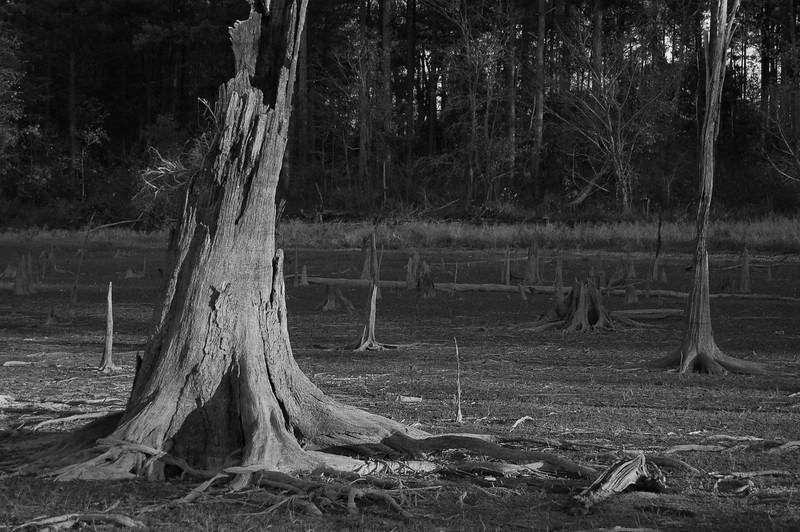Dry Times - Falls Lake, North Carolina