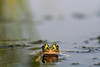 Frog eyes, Bloomington MN