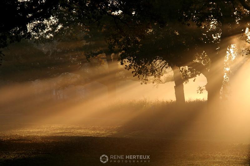 Morning has broken, Shakopee MN;platoi