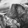Half Dome shot from Cook's Meadow